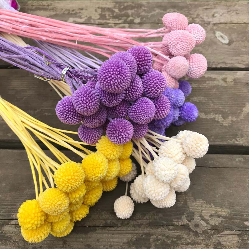 Naturally Preserved Flowers Balls of Craspedia Bouquets