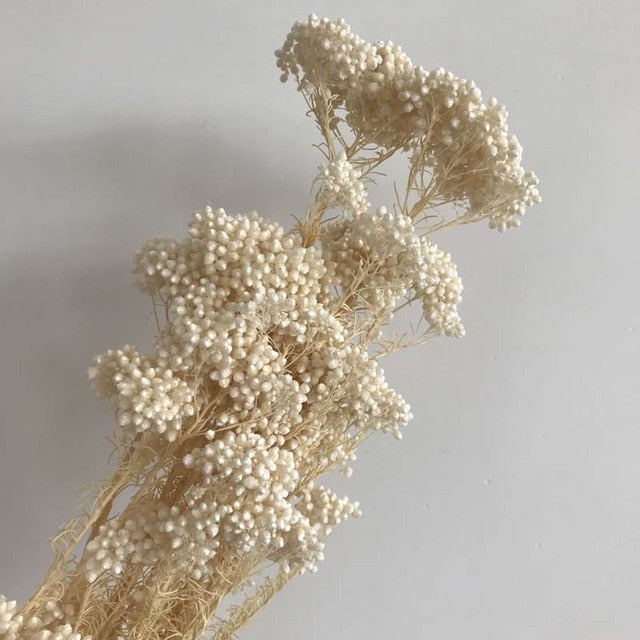 Naturally Preserved Millet or Ramillete Flower