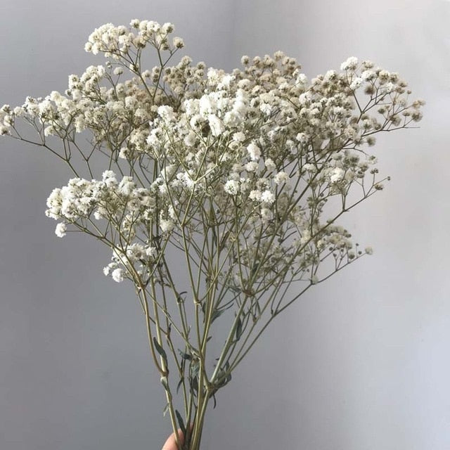 Naturally Preserved Babysbreath Flowers Branch