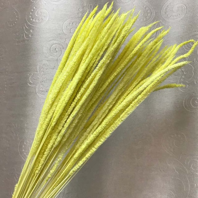 Naturally Dried Hypericum Japonicum or Small Pampas Grass Branch