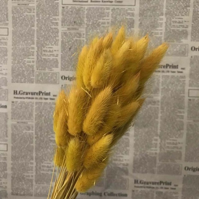 Naturally Preserved Hare's Tail Grass Flower or Rabbit Tail Bouquet