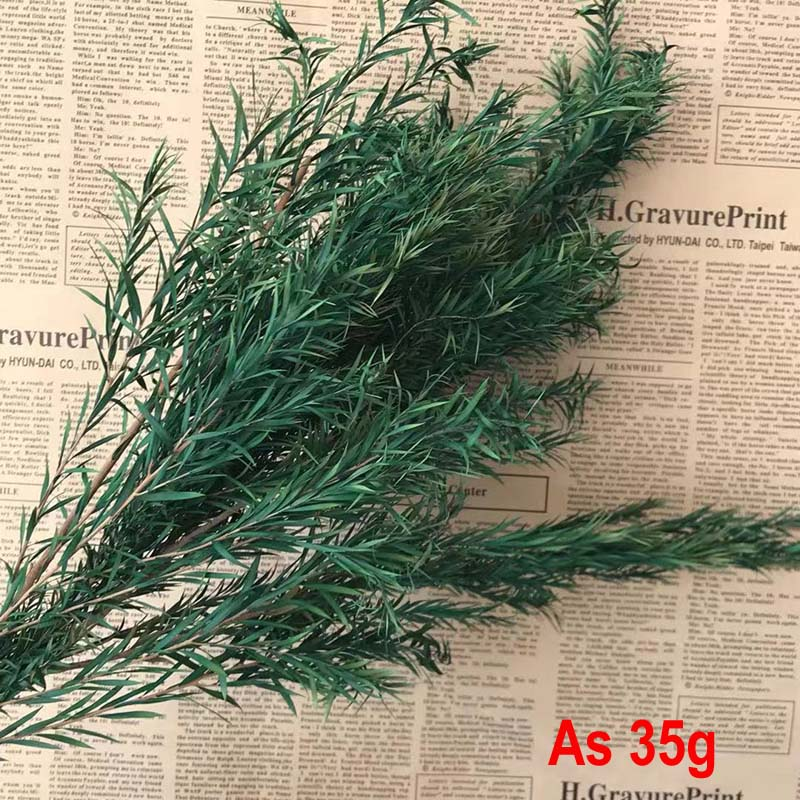 Real Naturally Dried and Preserved Melaleuca Eternal Grass