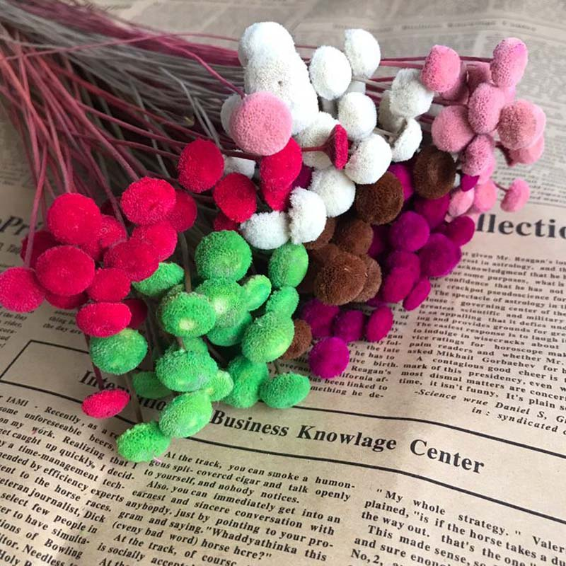 Naturally Preserved Mini Colorful Button Flower Branch