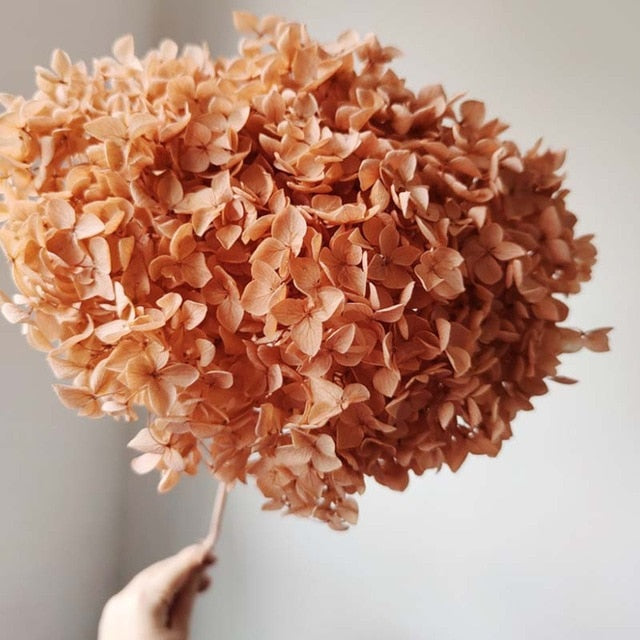 Real Naturally Preserved Fresh Branches of Hydrangea Flower