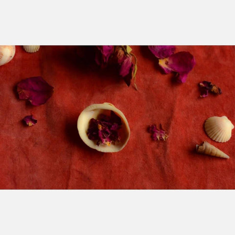 rose petals on red velvet with roses and seashells