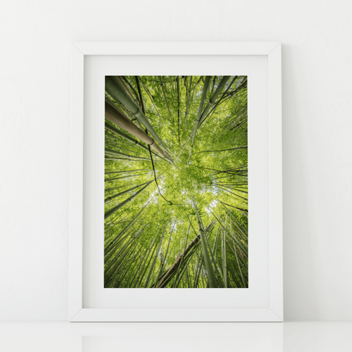 Abstract photography, green bamboo, sky view, Lulumahu Falls, Oahu, Hawaii, Matted Photo Print, Image