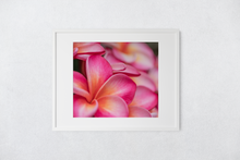 Load image into Gallery viewer, Pink, Orange, Plumeria Flowers Blooming, Oahu, Hawaii, Matted Photo Print, Image