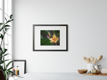 Load image into Gallery viewer, Yellow, Plumeria, Flower, Oahu, Hawaii, Framed Matted Photo Print, Interior Kitchen, Image