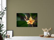 Load image into Gallery viewer, Yellow, Plumeria, Flower, Oahu, Hawaii, Metal Art Print, Interior Kitchen, Image
