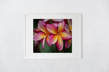 Load image into Gallery viewer, Pink, Yellow, Plumeria, Flowers, Petals, Oahu, Hawaii, Matted Photo Print, Image