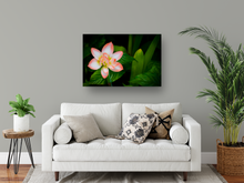Load image into Gallery viewer, Peach and White Flower, Green Leaves, Dramatic Background, Oahu, Hawaii, Metal Art Print, Living Room Interior, Image