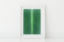 Load image into Gallery viewer, Closeup, Green Leaf, Symmetrical Lines, Oahu, Hawaii, Matted Photo Print, Image