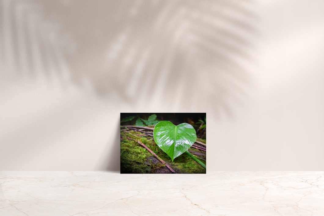 Green Heart-Shaped Leaf, Branches, Moss, Manoa Falls Trail, Oahu, Hawaii, Folded Note Card, Image