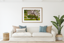 Load image into Gallery viewer, Kiawe Tree, Sunburst, Banyan Tree, Grass, Park, Waikiki, Oahu, Hawaii, Framed Matted Photo Print, Living Room Interior, Image
