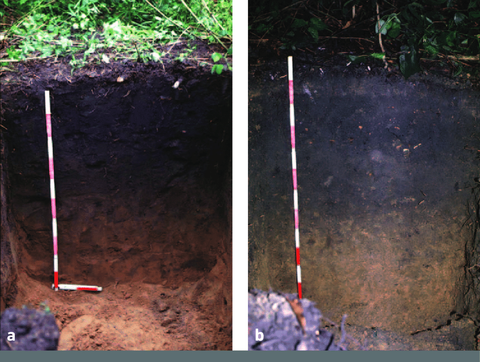 Ancient soils in the Amazon Basin promote healthy growth and act as a carbon sink