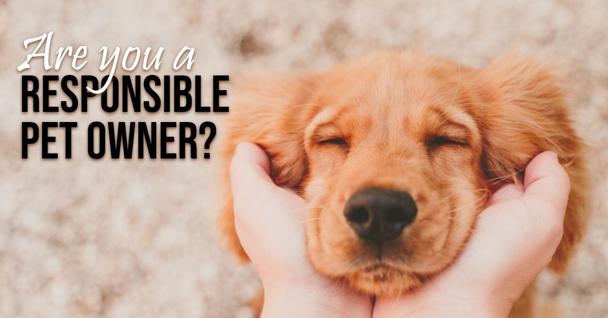 Are you a responsible Pet Owner