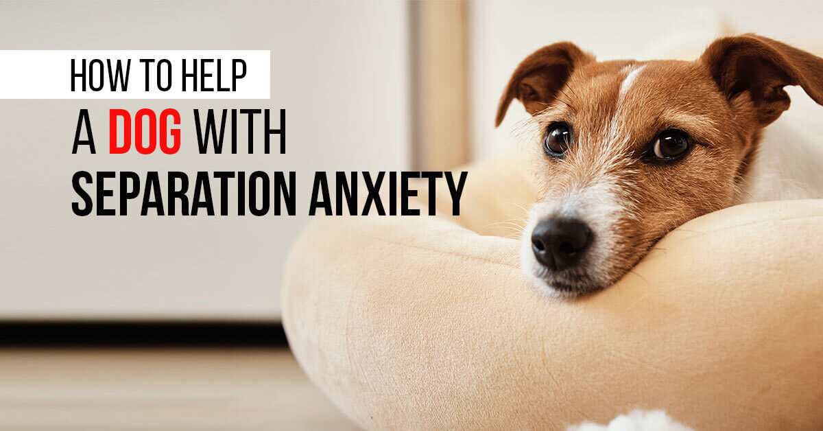 How-To-Help-A-Dog-With-Separation-Anxiety