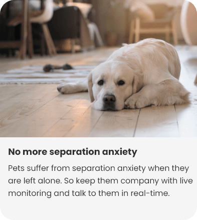 NO-more-separation-anxiety