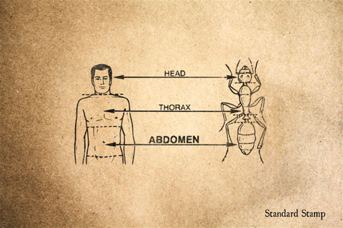 Abdomen Rubber Stamp