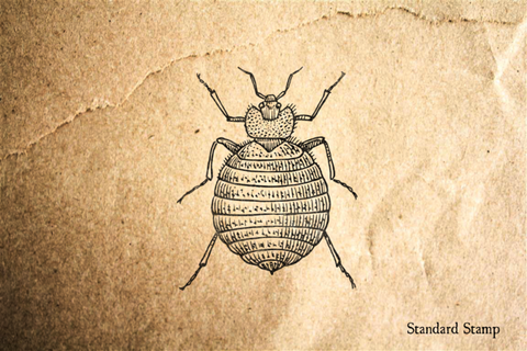 Bedbug Rubber Stamp