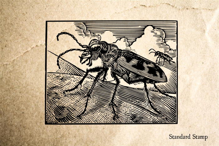 Beetle Woodcut Rubber Stamp