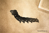 Big Caterpillar Rubber Stamp
