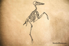 Bird Skeleton Profile Rubber Stamp