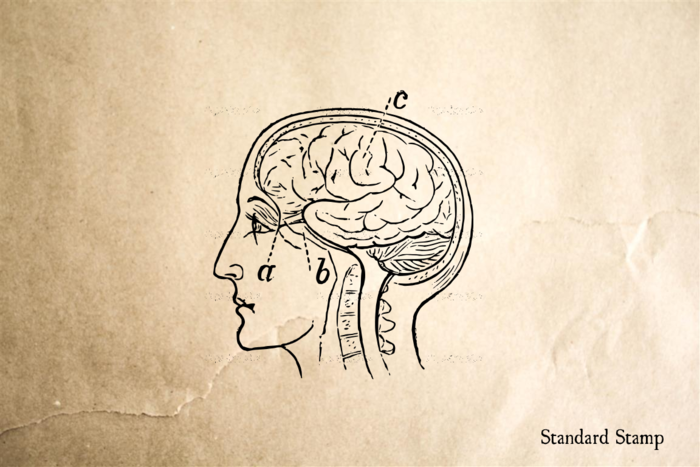 Brain Side Profile Rubber Stamp