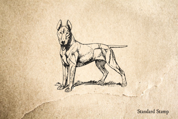 Bull Terrier Rubber Stamp
