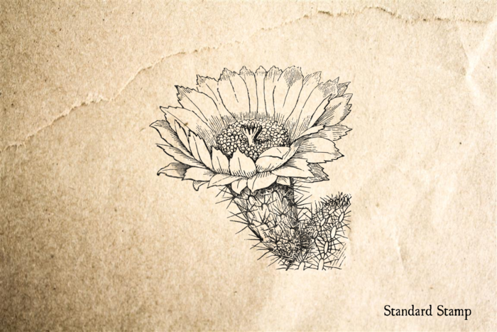 Cactus Flower Rubber Stamp