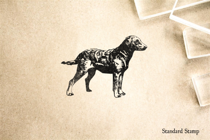 Chesapeake Bay Retriever Rubber Stamp