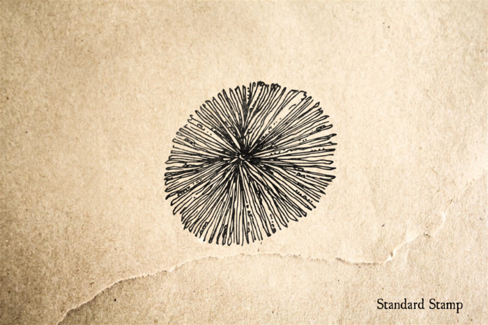 Coral Star Rubber Stamp