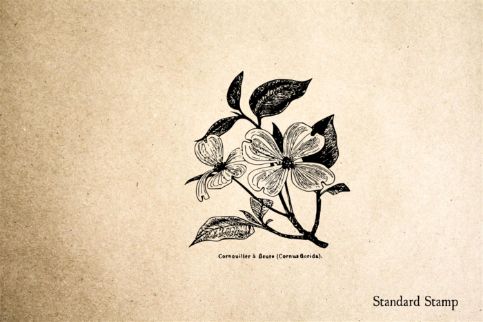 Dogwood Flower on Branch Rubber Stamp