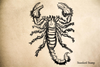 Hairy Scorpion Rubber Stamp