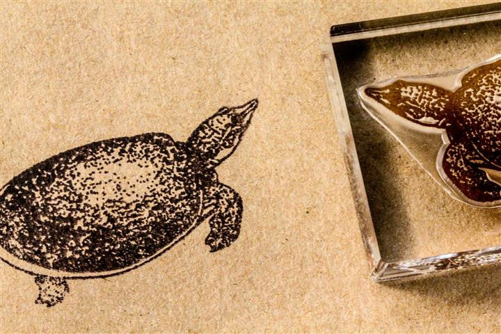 Soft-Shelled Turtle Classic 2 x 3 Inch Stamp
