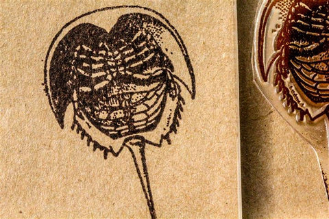 "Horseshoe Crab 2""x3"" Stamp"