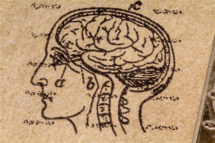 Human Brain in Head Profile 2 x 2 Inch Stamp