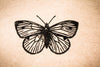 "Butterfly Topview 2""x2"" Stamp"
