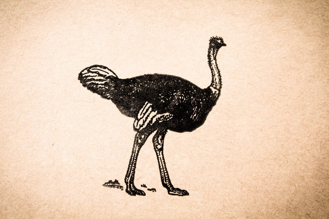 Ostrich Walking 2 x 2 Stamp