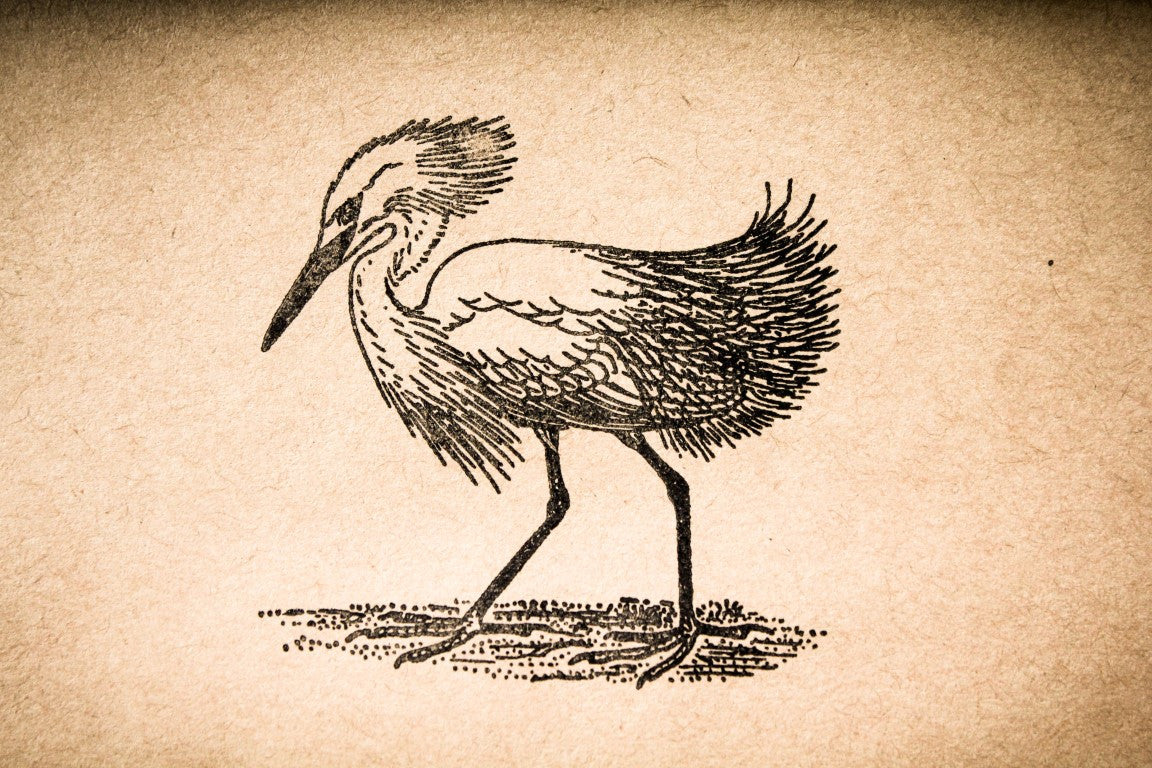 Stork Strutting 2 x 2 Stamp
