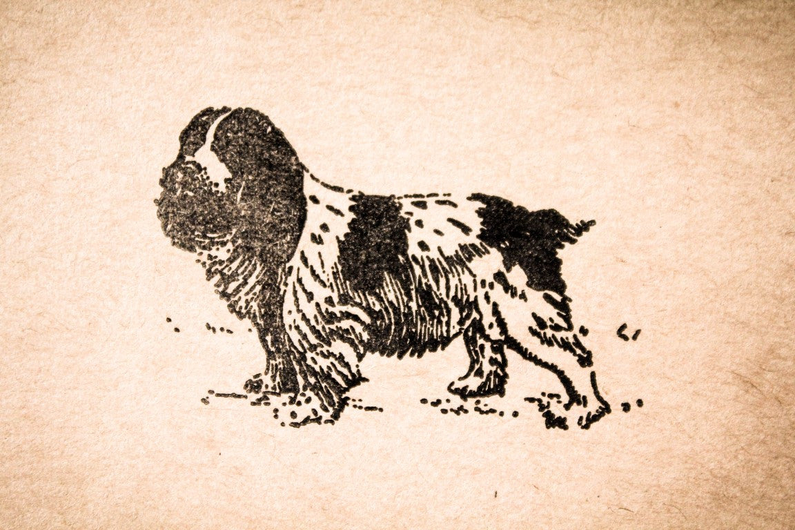 Spaniel Standing 2 x 2 Stamp
