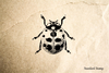 Ladybug Realistic Top View Rubber Stamp
