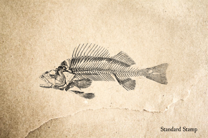 Perch Fish Skeleton Rubber Stamp