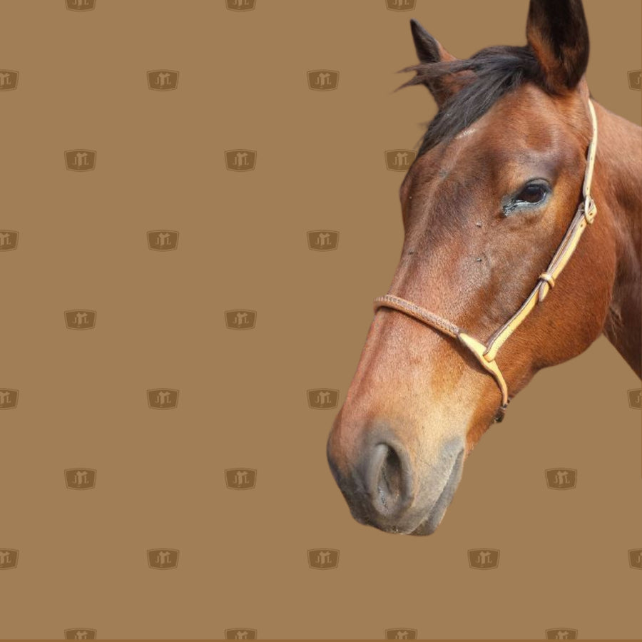 Drop Noseband for your horse
