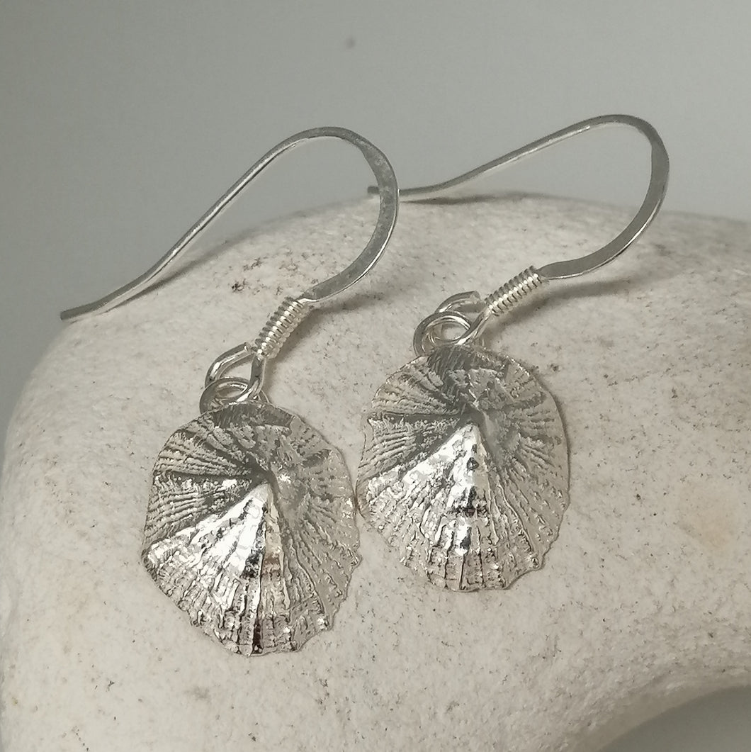 Small Marazion silver limpet shell drop earrings handmade by Sharon McSwiney
