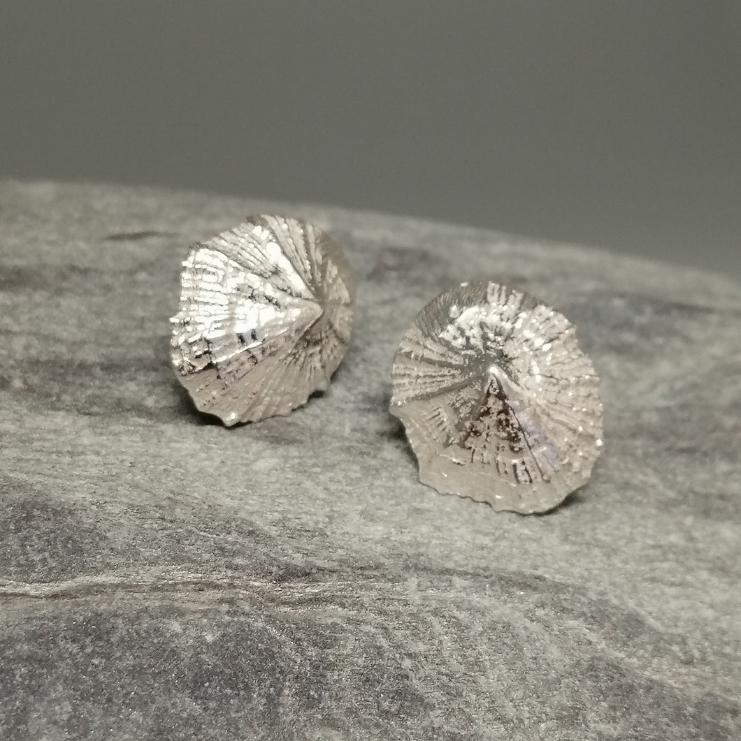 Small Marazion silver limpet shell stud earrings handmade by Sharon McSwiney