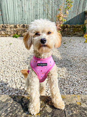Maisie Daisy Reversible Harness