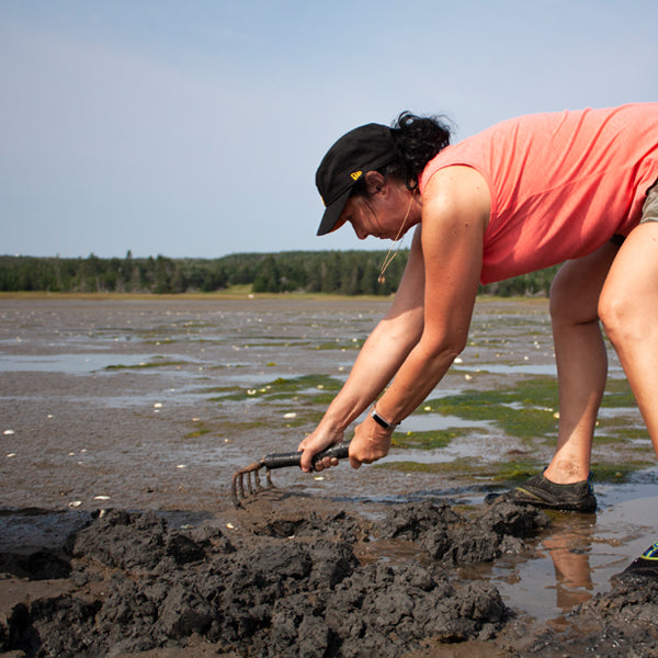 Clam Harbour Clam Digging Adventure