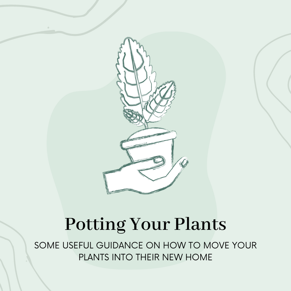 Potting Your Plants | When and How to Re-Pot Your Plants