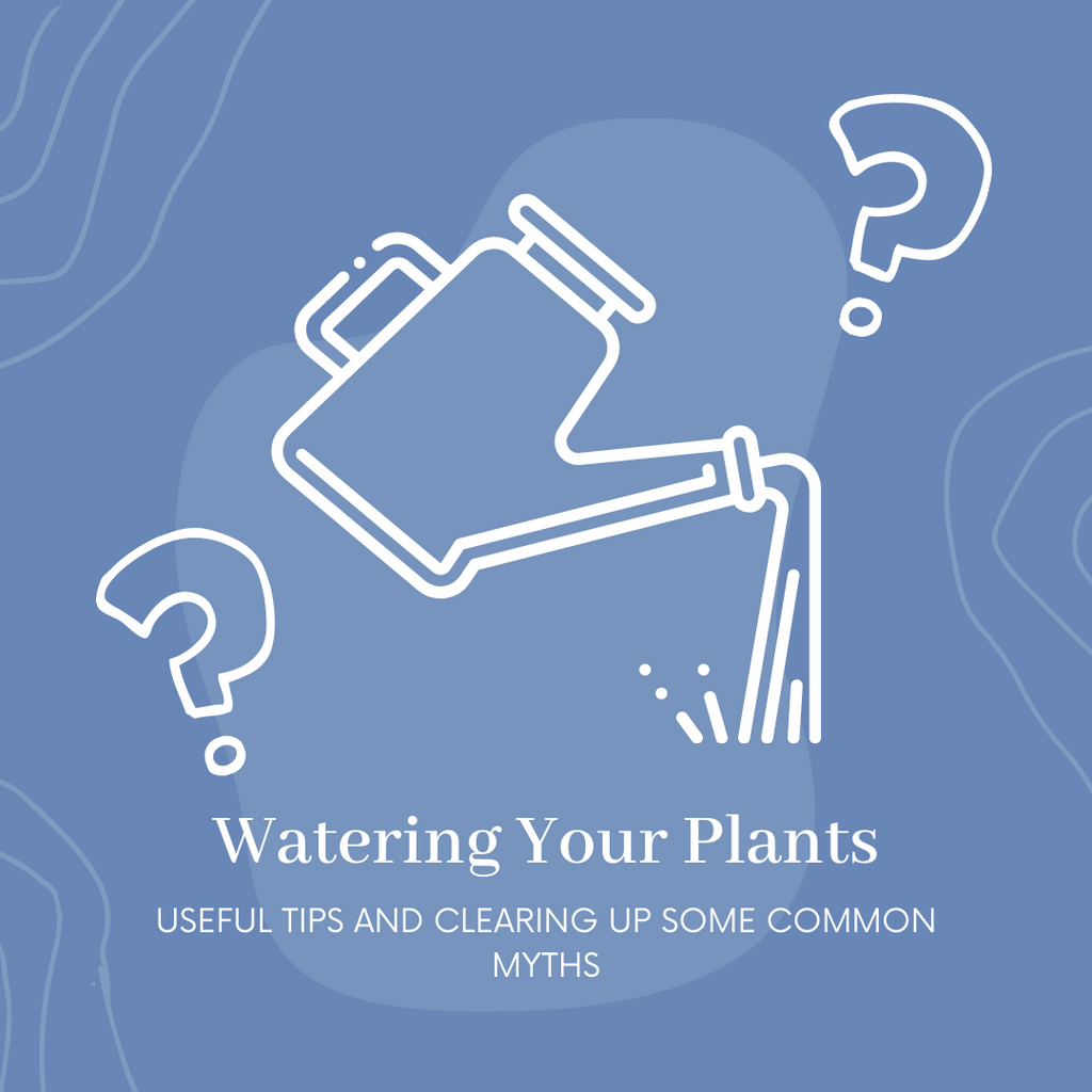 A Foolproof Guide To Watering Your Plants